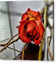 Acrylic Print featuring the photograph A Rose On Bamboo by Diana Mary Sharpton