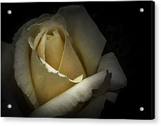 Acrylic Print featuring the photograph A Rose by Ryan Photography