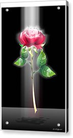 A Rose Acrylic Print by William R Clegg