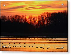A Scene At Bombay Hook National Acrylic Print by George Grall
