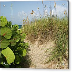 Acrylic Print featuring the photograph A Sea Grape Welcome by Michelle Wiarda
