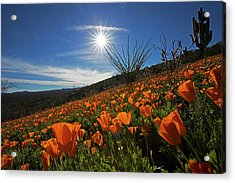 A Sea Of Poppies Acrylic Print
