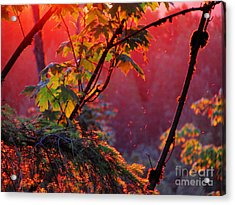 A Season's  Sunset Dusting Acrylic Print by Natalie Ortiz