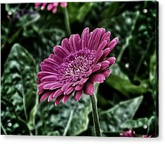 A Shade Of Purple Acrylic Print