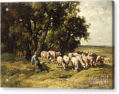 A Shepherd And His Flock Acrylic Print