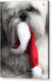 A Shih Tzu Christmas Acrylic Print