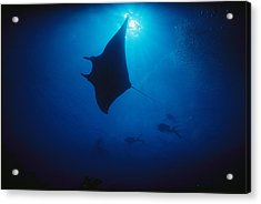 A Silhouetted Manta Ray Swims In Deep Acrylic Print by Raul Touzon