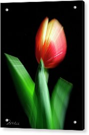A Single Bloom Acrylic Print by Frederic A Reinecke