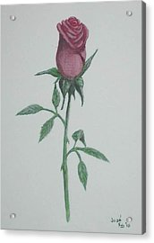A Single Red Rose Acrylic Print