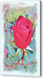 Acrylic Print featuring the photograph A Single Rose In October by Joan  Minchak