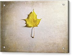 A Single Yellow Maple Leaf Acrylic Print by Scott Norris
