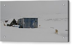 A Sledge Dog House Two Acrylic Print by Sidsel Genee