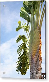 A Slice Of Nature Acrylic Print
