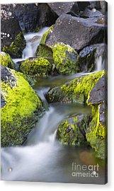 A Small Stream Acrylic Print by Tim Grams