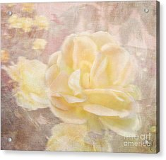 A Softer Rose Acrylic Print by Victoria Harrington
