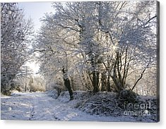 A Sparkling Winter Day Acrylic Print by Sophie De Roumanie