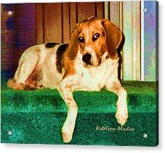 A Special Beagle Acrylic Print