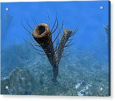 A Species Of Pirania, A Primitive Acrylic Print by Walter Myers