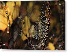 A Spiders Creation Acrylic Print by Karol Livote