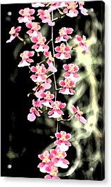 A Splash Of Pink Acrylic Print by Nanette Hert