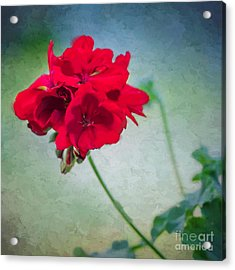 Acrylic Print featuring the photograph A Splash Of Red by Betty LaRue