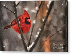 A Spot Of Color Acrylic Print by Lois Bryan