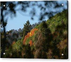 Acrylic Print featuring the photograph A Spot Of Fall by DeeLon Merritt