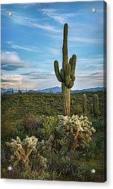 Acrylic Print featuring the photograph A Spring Evening In The Sonoran  by Saija Lehtonen