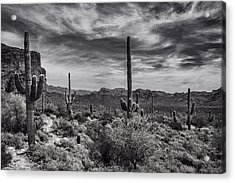 Acrylic Print featuring the photograph A Morning Hike In The Superstition In Black And White  by Saija Lehtonen