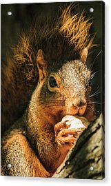 A Squirrel And His Nut Acrylic Print