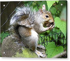 A Squirrelly Portrait Acrylic Print