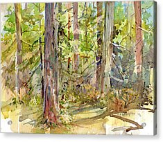 A Stand Of Trees Acrylic Print