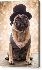 Acrylic Print featuring the photograph A Star Is Born - Dog Groom by Edward Fielding