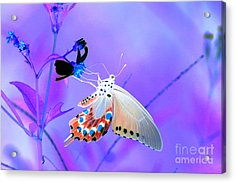 A Strange Butterfly Dream Acrylic Print by Kim Pate