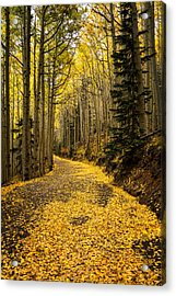 A Stroll Among The Golden Aspens  Acrylic Print