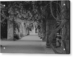 A Stroll Under The Vines Bw Acrylic Print