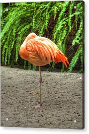 A Study In Pink Acrylic Print by Michael Garyet