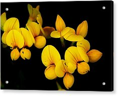 A Study In Yellow Acrylic Print by David Lane
