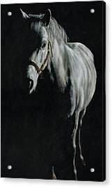 A Study Of A Pony In The Shadows Acrylic Print by Richard Mountford