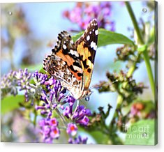 Acrylic Print featuring the photograph A Summer Lady - Painted Lady Butterfly by Kerri Farley