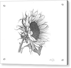 A Sunflowers Beauty Acrylic Print