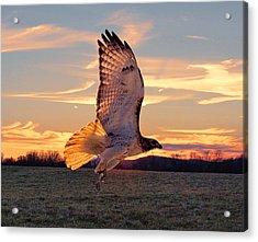 A Sunset Flight Acrylic Print by B Wayne Mullins