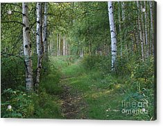 A Suspended Silence Where The Wild Things Are Acrylic Print by Sharon Mau