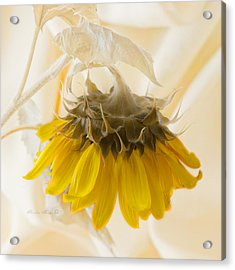 A Suspended Sunflower Acrylic Print