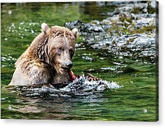 A Tail Of A Bear Eating A Fish Acrylic Print