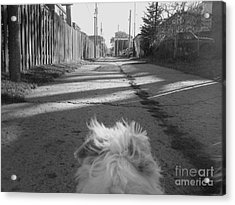 A Terriers Perspective Acrylic Print by Reb Frost
