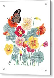 A Tethered Butterfly Acrylic Print by Stanza Widen
