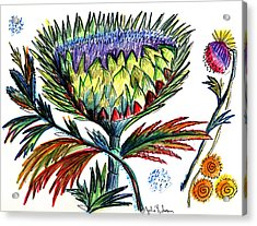 A Thistle Acrylic Print by Julie Richman