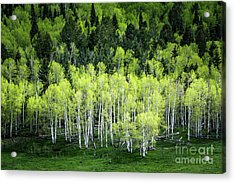 Acrylic Print featuring the photograph A Thousand Shades Of Green by The Forests Edge Photography - Diane Sandoval