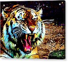 A Tiger's Roar Acrylic Print by Zedi